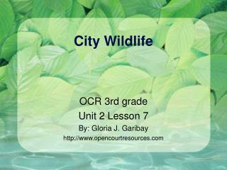 City Wildlife