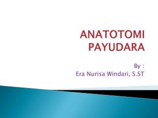 ANATOTOMI                      PAYUDARA