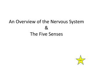 An Overview of the Nervous System  &  The Five Senses