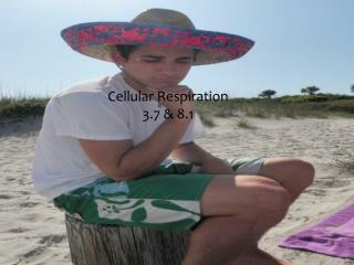 Cellular Respiration 3.7 & 8.1
