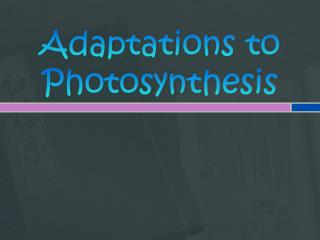 Adaptations to Photosynthesis