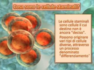 Cosa sono le cellule staminali?