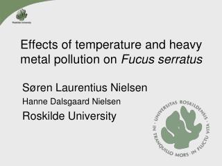 Effects  of  temperature  and heavy metal pollution  on Fucus serratus