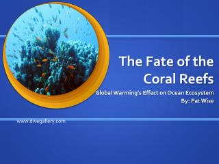 The Fate of the Coral Reefs
