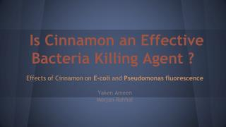 Is Cinnamon an Effective  Bacteria Killing Agent ?