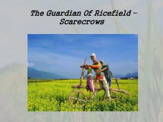 T he Guardian Of  Ricefield  – Scarecrows