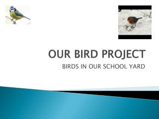 OUR BIRD PROJECT