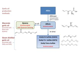 Allicin Antimicrobial