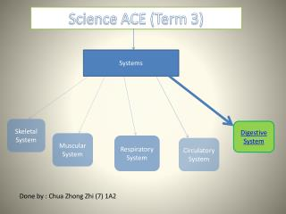 Science ACE (Term 3)
