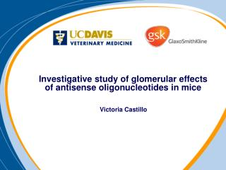 Investigative study of glomerular effects of antisense oligonucleotides in mice