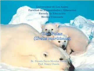 Oso Polar  ( Ursus maritimus )