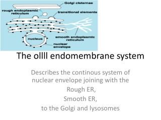 The  ollll endomembrane  system