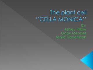 The plant cell  ''CELLA MONICA''