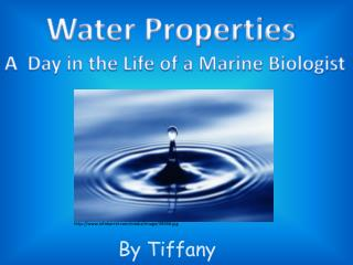 Water Properties  A  Day in the  Life of a Marine Biologist