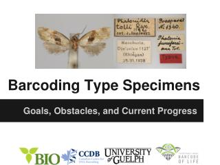 Barcoding Type Specimens