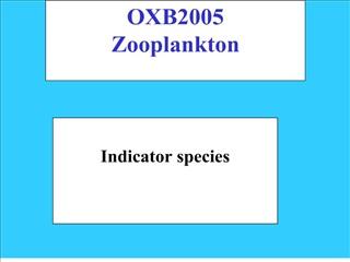 OXB2005 Zooplankton