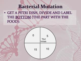 Bacterial Mutation