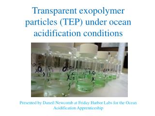 Transparent exopolymer particles (TEP) under ocean acidification conditions