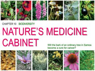 CHAPTER 10 BIODIVERSITY NATURE'S MEDICINE CABINET