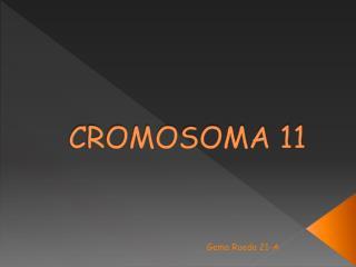 CROMOSOMA 11