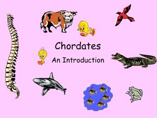 Chordates An Introduction