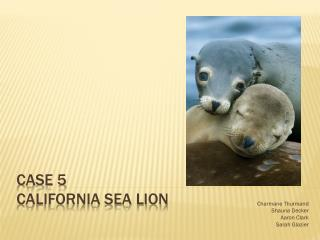 Case 5 California Sea Lion