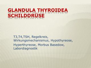 Glandula Thyroidea SCHILDDRÜSE