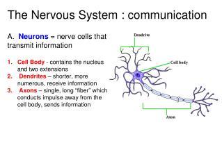 The Nervous System : communication