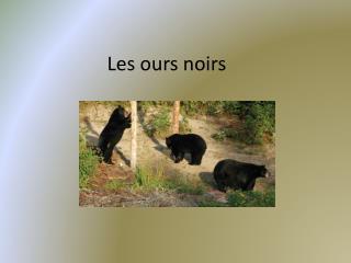 Les  o urs  noirs