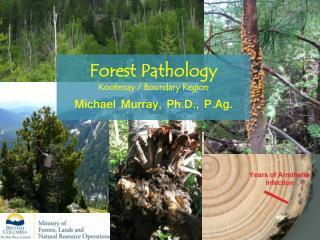 Forest Pathology Kootenay / Boundary Region Michael Murray, Ph.D., P.Ag.