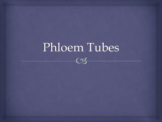 Phloem Tubes