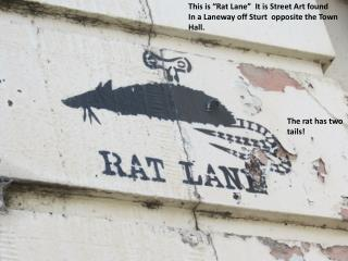 """This is """"Rat Lane""""  It is Street Art found  In a Laneway off Sturt  opposite the Town Hall."""
