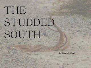 THE STUDDED SOUTH