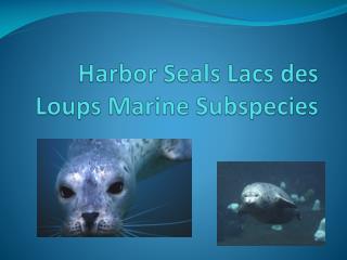 Harbor Seals Lacs des Loups Marine Subspecies