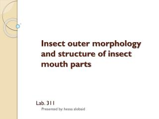 Insect outer morphology and structure of insect mouth parts