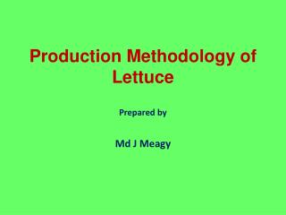 Production Methodology of Lettuce