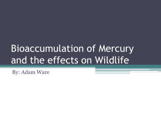 Bioaccumulation of Mercury and the effects on Wildlife
