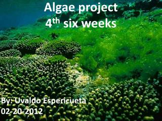 Algae project 4 th  six weeks