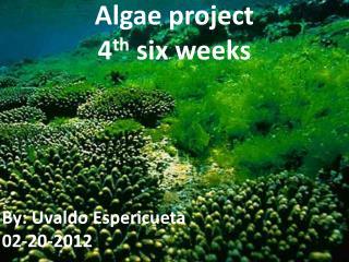 Algae project 4 th  six weeks