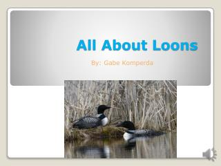 All About Loons