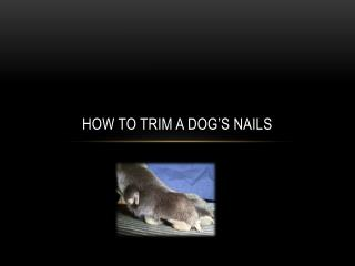 How to trim a dog�s nails