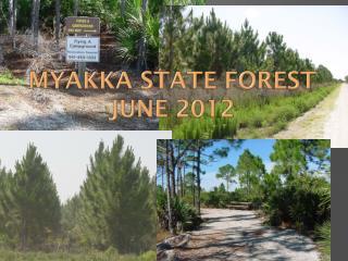 Myakka State Forest June 2012