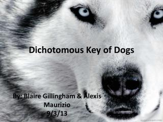 Dichotomous Key of Dogs