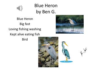Blue Heron  by Ben G.
