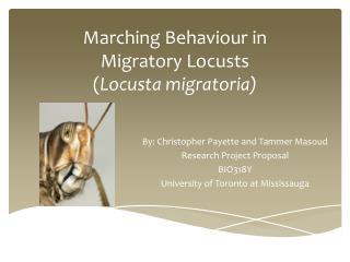 Marching Behaviour in Migratory Locusts ( Locusta migratoria)