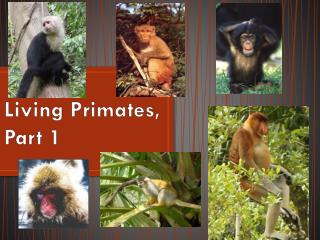 Living Primates, Part 1