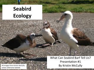 Seabird Ecology