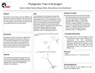 Phylogenetic Trees of  A3 phages!