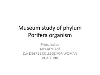 Museum study of phylum Porifera organism