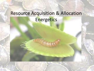 Resource Acquisition & Allocation Energetics
